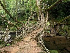 The Living Root Bridges of India ~ Kuriositas