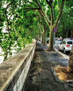 """Tranquilla Passeggiata Lungo il Tevere -  Quiet Walk Along the Tevere""  #photobydperry #repostromanticitaly #rome #italy #loves_united_lazio #europe ##wp #topeuropephoto #incredible_italy #Italia_super_pics #ig_italy #ig_rome #loves_united_hdr #going_into_details #loves_united_roma #spgitaly #igerslazio #loves_united_places #loves_united_friends #whatitalyis #ilikeitaly #mobilefineart #best_Europe #loves_united_lazio #pocket_Italy #europa_insta #gallery_of_all #total_Italy…"