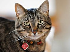 When+you+foster,+you+agree+to+take+a+homeless+cat+into+your+home+and+give+him+or+her+love,+care+and+attention+for+X+amount+of+time.+Learn+more+about+fostering+a+cat+here.+