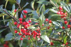 web/berries