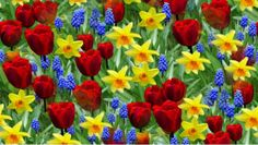 Τριαντάφυλλα,βιόλες,πασχαλιές,αγιόκλημα,λυγαριά,ελιά,για να είναι ανθισμένο το σπίτι...για την ευτυχία του σπιτιού!!! Μια όμορφη σύνθεση λουλουδιών, «χαρίζει» στους ενοίκους ενός σπιτιού υγεία, καλή τύχη, ειρήνη, ευτυχία και ευφορία!!!