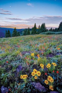A Guide to Colorado's Spectacular Wildflower Season - 5280 Nature Aesthetic, Flower Aesthetic, Spring Aesthetic, Beautiful World, Beautiful Places, Pretty Pictures, Aesthetic Pictures, Beautiful Landscapes, The Great Outdoors
