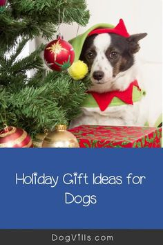 With the holidays approaching in just under three months, it's time to start thinking about holiday gift ideas for dogs!