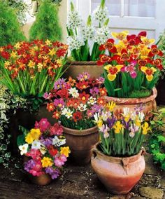 Summer flowering bulbs such as these are a wonder to behold. Summer Flowering Bulbs, Summer Bulbs, Spring Bulbs, Garden Bulbs, Planting Bulbs, Garden Plants, Planting Flowers, Bulb Flowers, Flower Pots