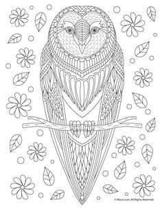 Owl Adult Coloring Page