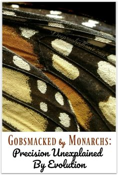 Gobsmacked by Monarchs: Precision Unexplained By Evolution. wings   #beauty #beautiful #amazing #wonderful #art #design #artwork #color #details #nature #naturelovers #book #evidence #naturephotography #fabulous #outdoor #discover #hidden #discoverearth #camera #books #mysterious #photography #creation #butterfly #wings #tiny #awesome #variety #god #microscope #numbers #attributes #evidence #details #flying #insects #colorful #fabulous #wisdom #sketchbook #animals #microscope #details
