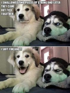 Dog Puns - Funny Dog Quotes - Dog Puns The post Dog Puns appeared first on Gag Dad. Funny Animal Jokes, Funny Animal Pictures, Cute Funny Animals, Cute Baby Animals, Funny Photos, Animal Humor, Sports Pictures, Funny Minion, Bizarre Pictures