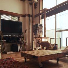 sumisumiさんの、WOODPRO足場板,シゲル,トシユキ,ヤスユキ,ディアウォール,キャットタワー,パレットソファー,ペットベッド,元和室,男前,廃材,一人暮らし,DIY,猫,いいね!コメントありがとうございます☆,したっけ連合,部屋全体,のお部屋写真