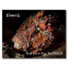 Deadly Stonefish on the Great Barrier Reef