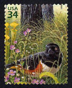 US Stamp - Longleaf Pine Forest 34c Eastern Towhee