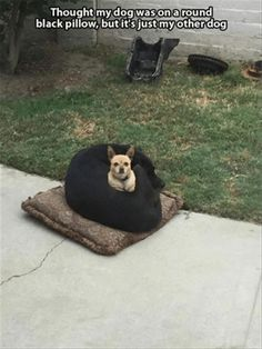 Oh my gosh!  At first sight, it DOES just look like it's sitting on a black pillow!!!
