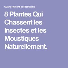 8 Plantes Qui Chassent les Insectes et les Moustiques Naturellement. Insecticide, Gardening, Construction, Tips, Photos, Garden, Insects, Plants, Herbs