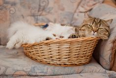Кошка — домашнее чудо... Фотографии от memberx