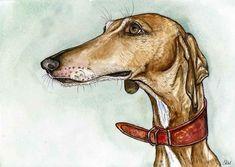 Of Guarded Demeanour - Azawakh Dog Art Print