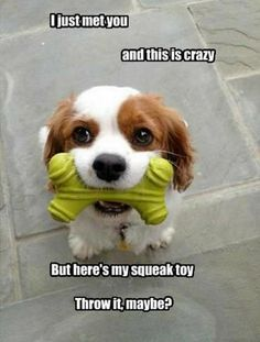 The puppy wants to play