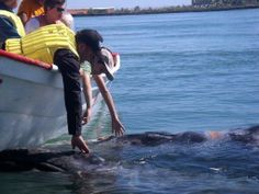 This is the ONLY way whales and human beings should interact! Puerto Adolfo Lopez Mateos, on the Pacific coast of Baja California Sur, Mexico.