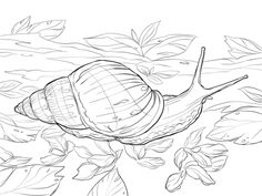 Giant African Land Snail Coloring page
