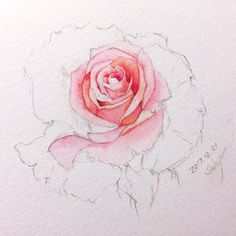 New Tattoo Watercolor Flower Arm Roses Ideas Flower Sketches, Art Sketches, Drawing Flowers, Painting Flowers, Rose Sketch, Plant Drawing, Mandala Drawing, Watercolor Rose, Watercolor Artwork