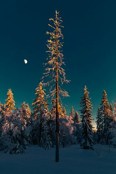 """de-preciated: """"UNDER A MOONLIT SKY (by Tore Thiis Fjeld)Under a moonlit sky, I wander through the forest, marveling at its beauty, the serenity, the natural silence"""" Cool Pictures, Cool Photos, Snowy Pictures, Beautiful Pictures, Winter Schnee, Nature View, Winter Photos, Photos Of The Week, Dark Night"""