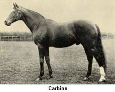 The mighty New Zealand CARBINE great racehorse and sire includes descendants Northern Dancer, Secretariat, Seattle Slew, Ballymoss, Shergar, Arkle, Never Say Die, Mr. Prospector, Nasrullah, Nijinsky II (winner of the UK Triple Crown), Royal Palace, Fort Marcy, Better Loosen Up, Sir Ivor, Invasor, Phar Lap, Tulloch, Kingston Town