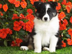 Featured Dog Wallpaper Download 14
