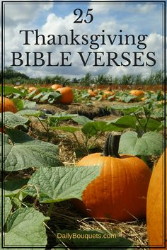Here are 25 Thanksgiving Bible verses to help you celebrate thankfulness to God during these beautiful November days leading up to the Thanksgiving holiday.