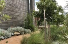 Modern Australian Garden, Landscape Design, Garden Design, Garden King, Front Yard Landscaping, Lake View, Pools, Nativity, Garden Ideas