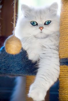 Shared... Beautiful Cat Names And Meanings #facebook