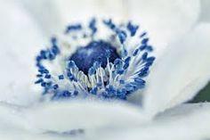 blue heart - Google-Suche