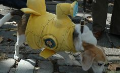 """Remember the Beatles' song """"Yellow Submarine?"""" I'm not saying that was the inspiration for this costume, but it certainly came to mind when I saw this pup. (From: 20 Spectacular Photos of Pets in Costume)"""