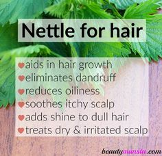 Benefits of Stinging Nettle for Hair Growth & More - beautymunsta - free natural beauty hacks and more! - Discover uses & benefits of stinging nettle for hair growth & more! Informations About Benefits of S - Hair Remedies For Growth, Hair Growth Treatment, Hair Growth Tips, Natural Hair Growth, Natural Hair Styles, Hair Treatments, Lactating Mother, Hair Growth Shampoo, Vitamins For Hair Growth