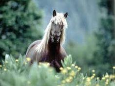 """Résultat de recherche d'images pour """"chevaux"""""""