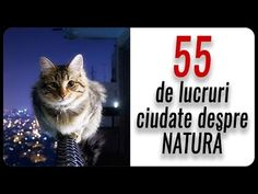 True Facts, Sounds Like, Books, Youtube, Animals, Instagram, Libros, Animales, Animaux