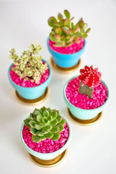 DIY Gold-Dipped Plant Pots - Pottery Barn - Succulents with Pink Rocks. I'm Making these for my desk at work! Succulent Pots, Cacti And Succulents, Planting Succulents, Potted Plants, Indoor Plants, Planting Flowers, Plant Pots, Pink Succulent, Indoor Cactus