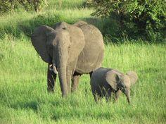 Elephant with baby at Ngorongoro Crater, Tanzania