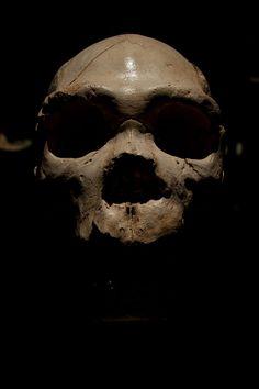 Homo heidelbergensis by Raúl Albert on 500px