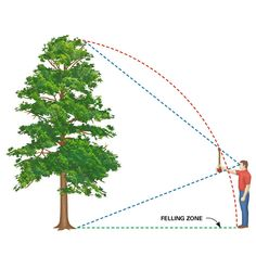 "Estimate the Felling Zone - Trees are taller than you think and reach farther on the ground than you'd expect. You can estimate where a tree will fall by using the ""ax handle trick."" Hold an ax handle at arm's length, close one eye, and back away from or move toward the tree until the top of the ax is even with the treetop and the bottom is even with the base. Your feet should be about where the treetop will rest after falling. It's just an estimate, though, so allow extra room if there's…"