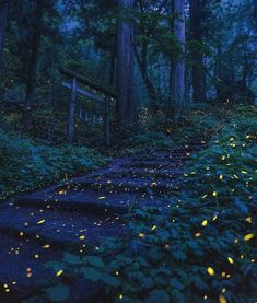 Pictures Worth More Than 1000 Words (22 images) - I Can Has Cheezburger? Night Aesthetic, Nature Aesthetic, Nagano Japan, Night Forest, Shiga, Nature Images, Animes Wallpapers, Night Skies, Night Time