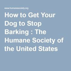 How to Get Your Dog to Stop Barking : The Humane Society of the United States