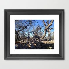 Fallen Tree Framed Art Print by Jaymee - $40.00