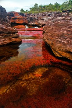 Cano Cristales River Caño Cristales is a Colombian river located in the Serrania de la Macarena province of Meta. The river is commonly ca. Places To Travel, Places To See, Travel Destinations, Places Around The World, Around The Worlds, Image Nature, Colombia Travel, South America Travel, Amazing Nature