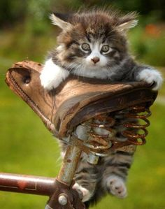 Very interesting post: 24 Cats Pictures. Also dompiсt.сom lot of interesting things on Funny Cat.