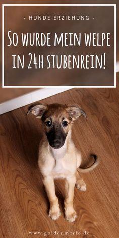 So wurde mein Welpe in 24 Stunden stubenrein. Die Erziehung eines Hundewelpen zur Stubenreinheit ist nicht immer einfach. Mit diesem Trick klappt es bestimmt auch bei Deinem Welpen! #welpe #hund #hundewelpe #stubenreinheit #stubenrein #gassi #trick #kommando || www.goldenmerlo.de