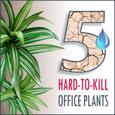 Bring life to the office with 5 hard-to-kill office plants.