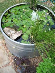 Galvanized tubs and farm stock tanks are an ideal choice for container water gardens.  #WaterGardening