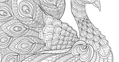 Peacock Coloring Page.jpg