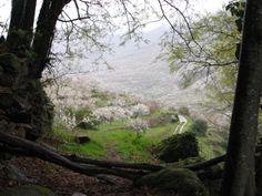 Saliendo de una zona boscosa aparece el más hermoso de los valles en flor: el Valle Cereza, creado por el Río Jerte.