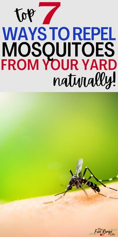 Do you ever feel like mosquitoes are just out to get you? Learn how to get rid of mosquitoes using these natural mosquito repellent techniques. These will help keep your yard mosquito free so you can enjoy being outside! Mosquito Trap, Natural Mosquito Repellant, Mosquito Repelling Plants, Herbal Remedies, Home Remedies, Bug Spray Recipe, Detox Your Home, Mosquitoes, What Can I Do