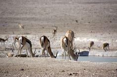 Safari Parque Nacional Etosha Namibia