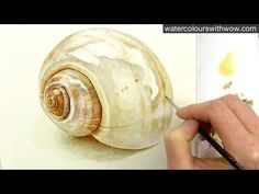 How to paint a realistic shell in watercolor by Anna Mason - YouTube